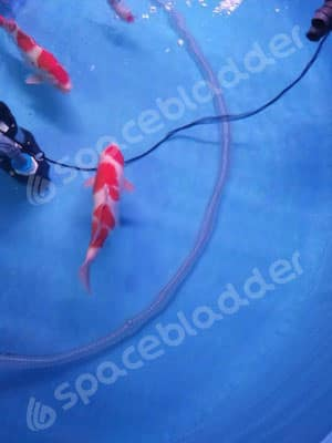Flexible Collapsible Round Movable KOI Fish Tank 3