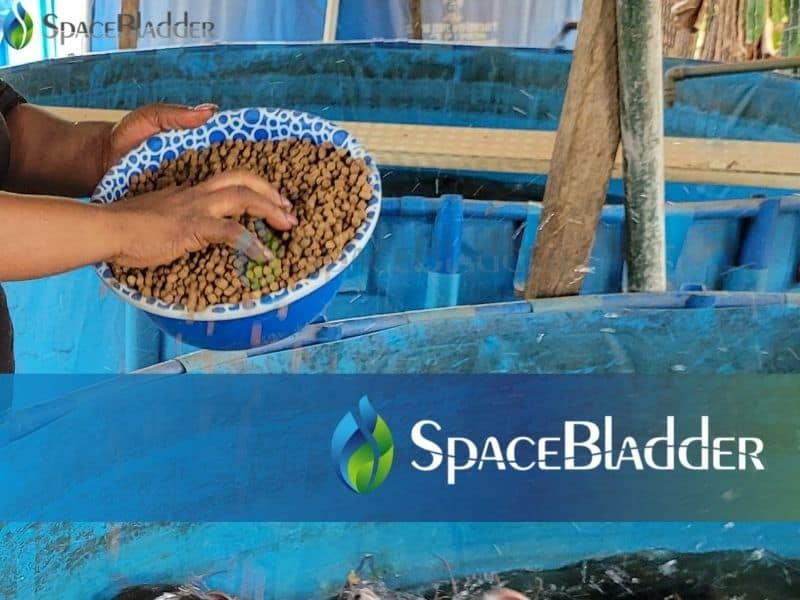 2000l backyard pvc tarpauline fish farming tank custom feedback 2
