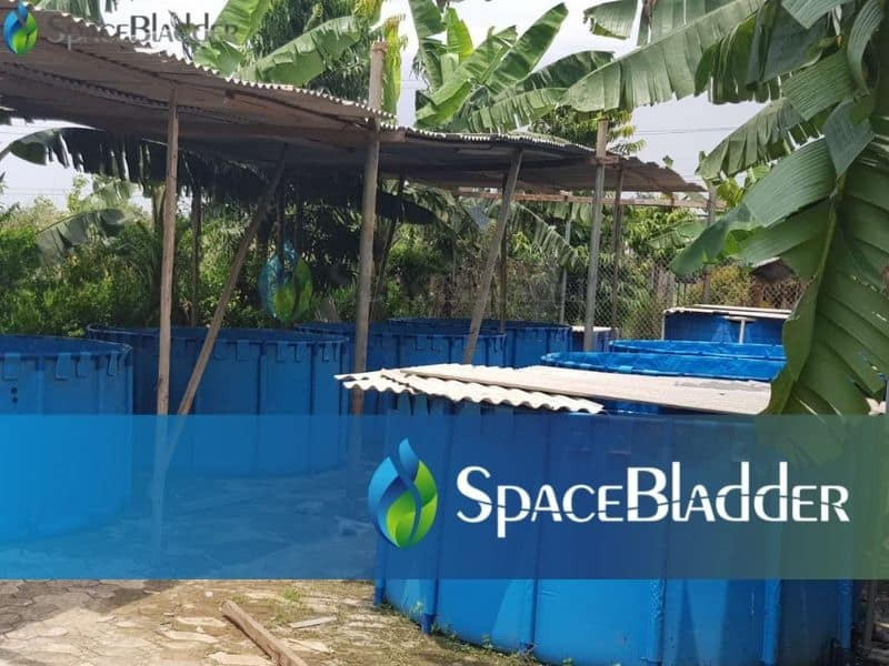 2000l backyard pvc tarpauline fish farming tank custom feedback 3